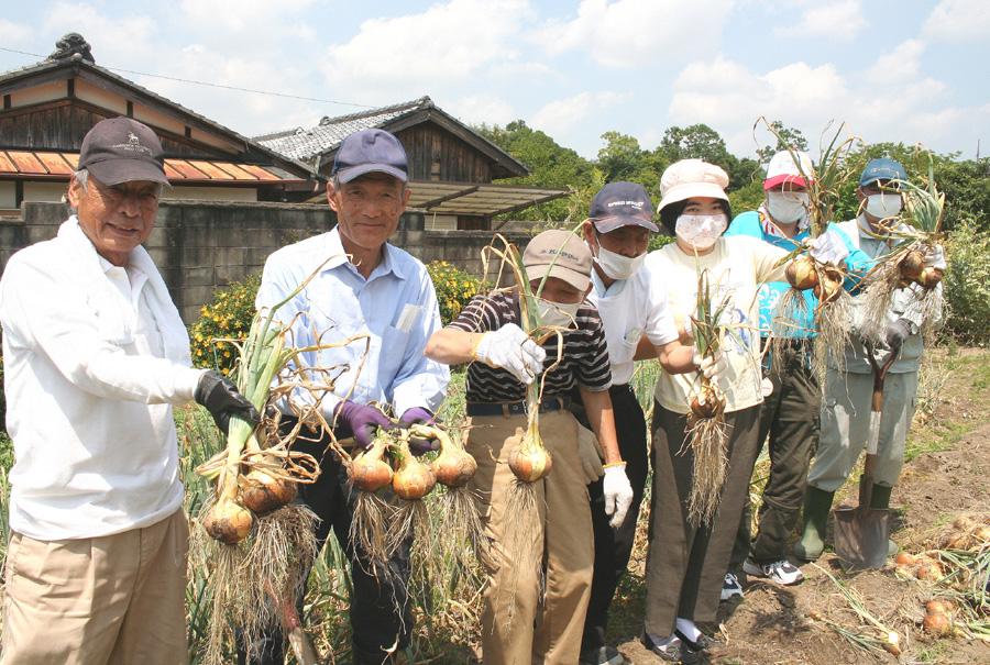 新タマネギ収穫、笑顔戻る/城陽作業所