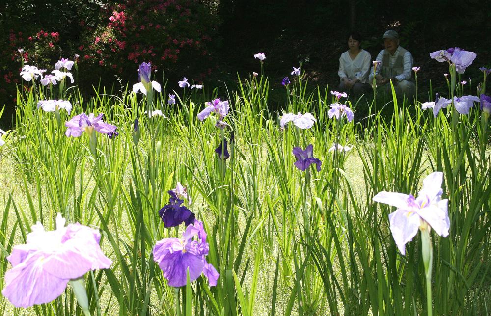 「花しょうぶ池」復活/城陽・鴻ノ巣山散策道