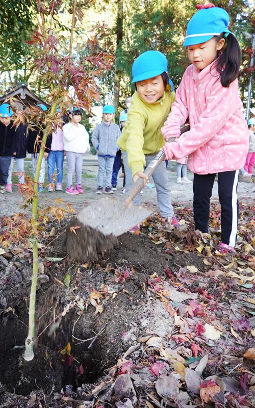 森林文化を守り育てる/宇治田原 危険木除去対策
