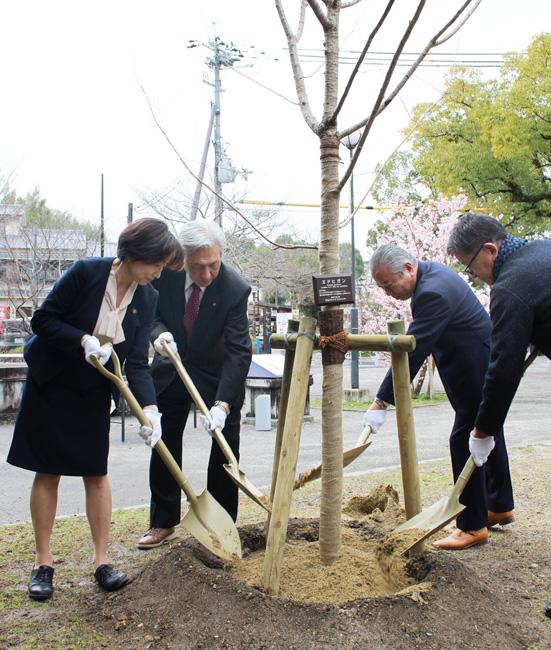 市民や観光客に喜びを/宇治川サクラプロジェクト