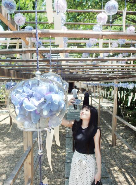 花の小径が涼風誘う「風鈴まつり」/宇治田原町奥山田 正寿院
