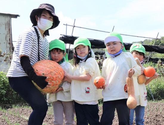 ハロウィン大カボチャ収穫/宇治・こざくら幼稚園