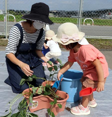 イチゴの苗植えを体験/井手